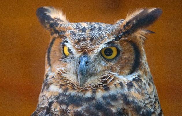 Rowe Adventures: Owl Prowl