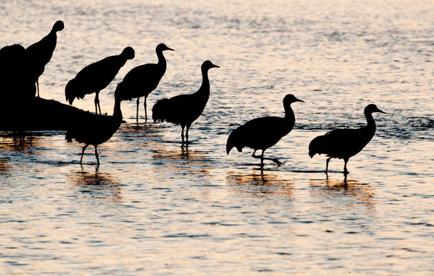 Birds & Conservation