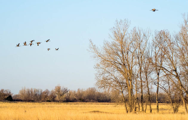 Fall Crane Viewing