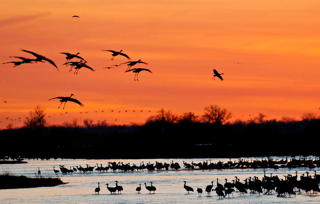 Audubon's Nebraska Crane Festival