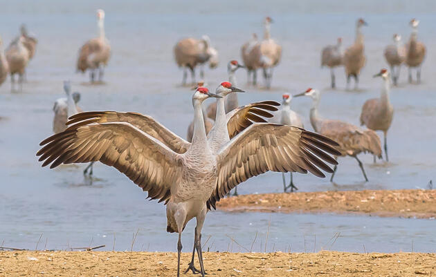 Crane Behavior Basics Webinar