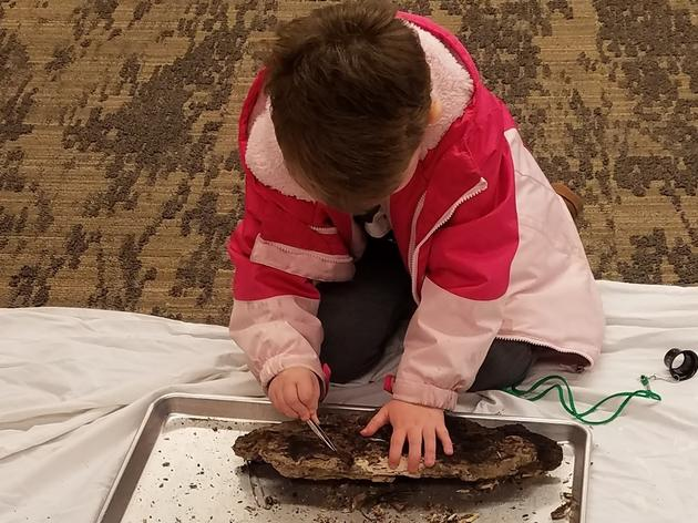 "Free Insect Exploration and Inspection at Rowe's ""Snug as a Bug"" Event"
