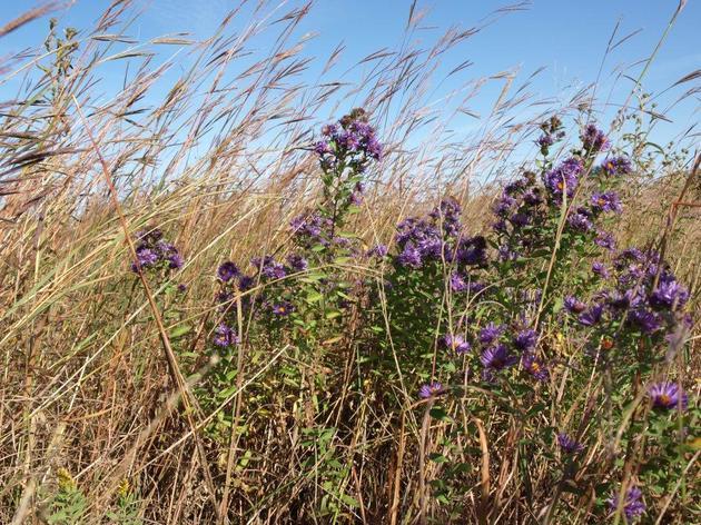 Rowe Sanctuary Prairies